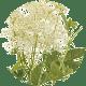 Wiązówka-błotna Suplementy Diety