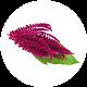 Amarantus Seria Active Life