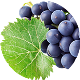Winogrono Nowości